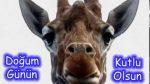Sevimli Zürafa ile doğum günü kutlaması :))