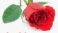 Kırmızı Güllü Doğum Günü Kutlaması
