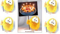 Şirin civcivle doğum günü kutlaması