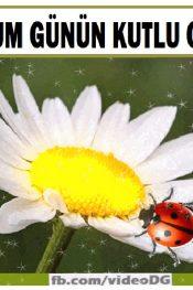 Uğur Böcekleri Eşliğinde Papatyalı doğum Günü Tebrik