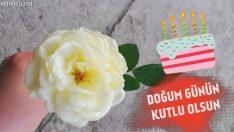 Beyaz Gülle Doğum Günün Kutlu Olsun